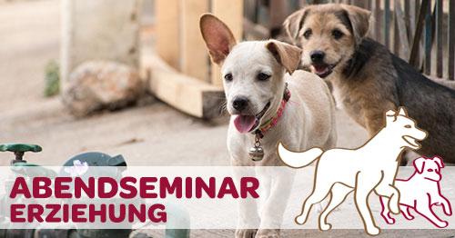 Abendseminar: So geht´s richtig - Die Erziehung deines Hundes