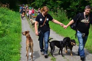 Sommerfest/Menschen mit Hunde beim Spaziergang