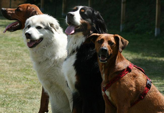 Grundlagen der Hundeerziehung 4 sitzende Hunde