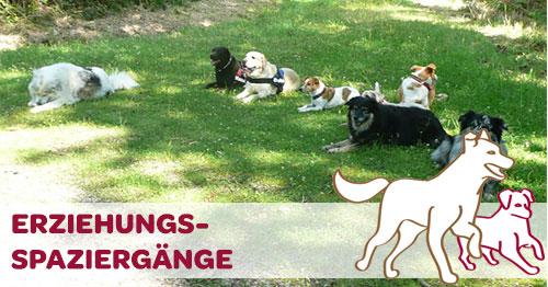 Erziehungsspaziergang fünf liegende Hunde