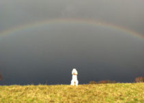 Hund vor Regenbogen