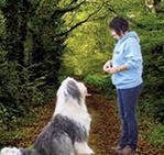 Grundlagen der Hundeerziehung/Hund im Signal