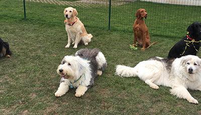 Wie erkennt man eine gute Hundeschule?