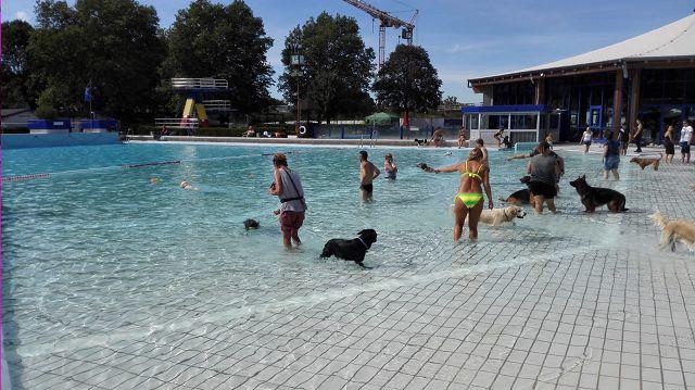 Hundebadetag Cuppamara 2018.(9)