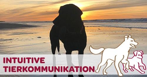 Intuitive Tierkommunikation