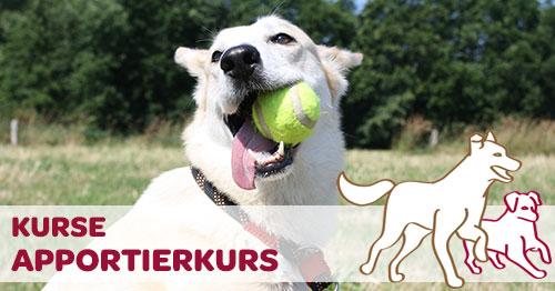 Apportieren Hund mit Ball im Maul