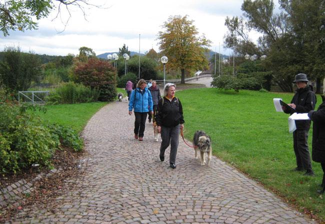 Social Walks Hunde an der Leine