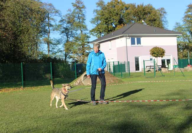 Körpersprachliches Longieren Hund im Longierkreis