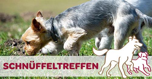 Schnüffeltreffen am Boden riechender Hund