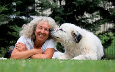 Second-Hand-Hunde – eine 2. Chance für Hunde aus dem Tierheim