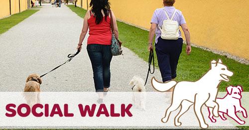 Social Walks