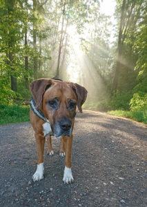 Sterbebegleitung/Hund vor Sonne