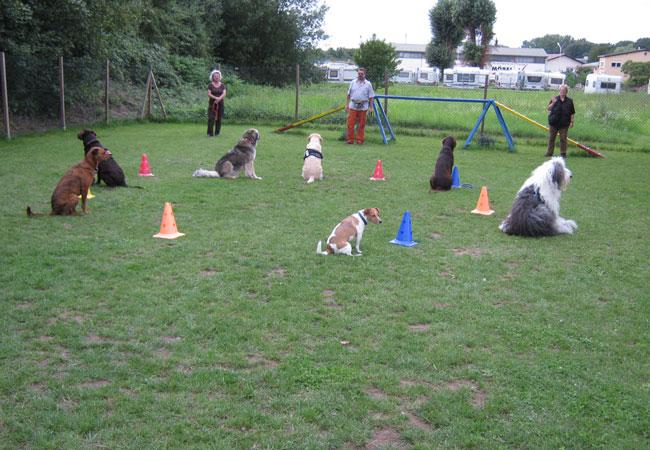 Erwachsene Hunde Erstgespräch Einzelstunde. Viele Hunde im Sitz.