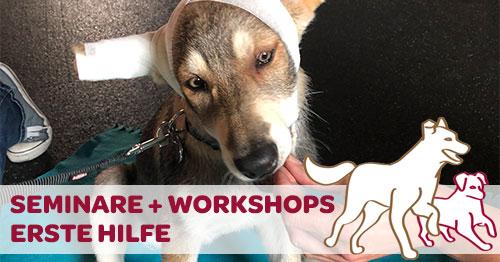 Erste-Hilfe-Workshop mit dem eigenen Hund
