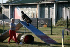Agility Funturnier 2019 Hund klettert über A Wand