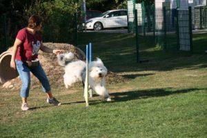 Agility Funturnier 2019 Hund springt über Hürde