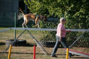Agility Funturnier 2019 Hund meistert den Steg