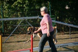 Agility Funturnier 2019 Hund meistert die Wippe