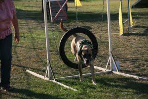 Agility Funturnier 2019 Hund springt durch den  Reifen