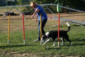 Agility Funturnier 2019 Hund geht durch den Slalom