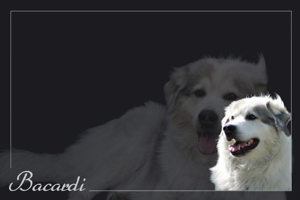 Bacardi 2019