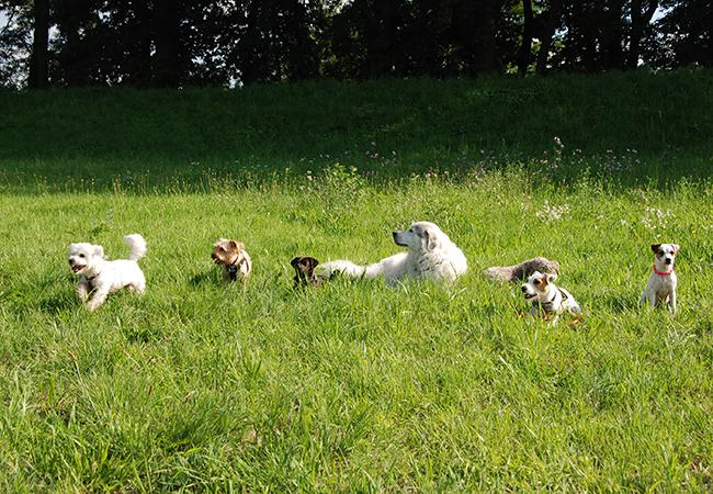 Training und Kurse 5 liegende Hunde