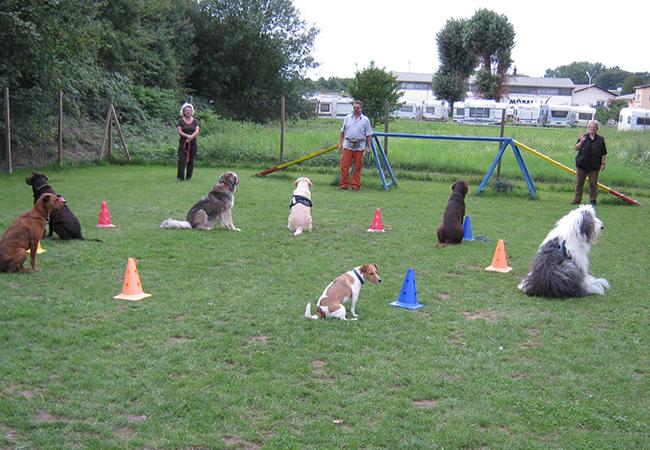 Junghunde 7 Hunde bei einer Bleibübung