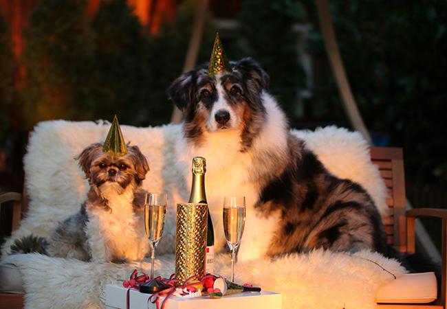 Mein Hund hat Silvesterangst – was tun?