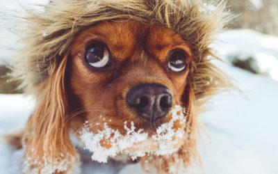 Winterliche Pfotenpflege