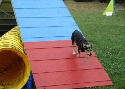 Hund geht über A-Wand