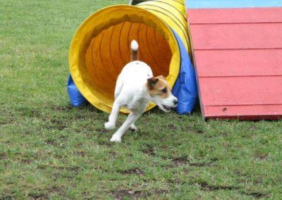 Hund kommt aus Tunnel