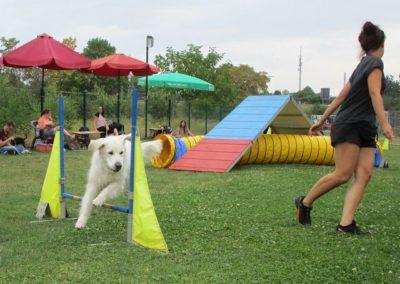 Hund geht über Hürde