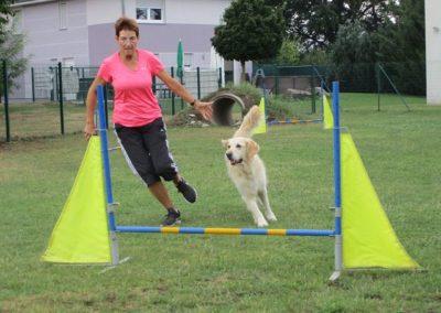 Hund fliegt über Hürde