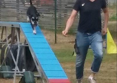 Hund geht über Steg