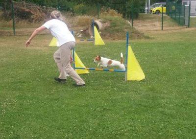 Hund im Flug über Hürde