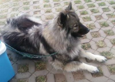 Hund beim warten