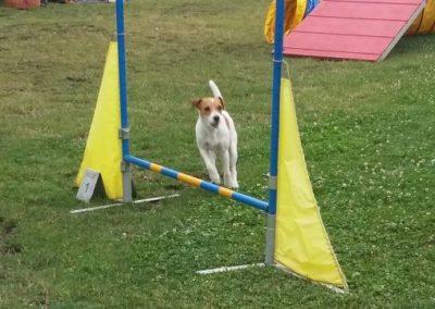 Hund vor Sprung