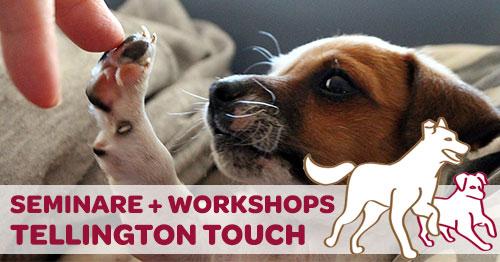 Workshop Tellington TTouch